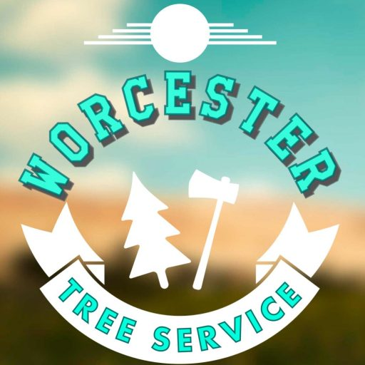 cropped-Worcester-Tree-Service-1-scaled-e1593324320205.jpg